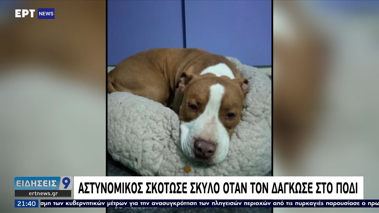 Αστυνομικός πυροβόλησε και σκότωσε σκύλο σε ταράτσα πολυκατοικίας ΕΡΤ 12/8/2021