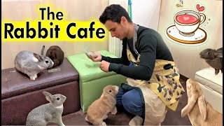 The Rabbit Cafe Tokyo Japan | Bunny Cafe Japan | Usa Cafe Mimi