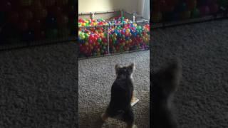 animale cainele vs ipad