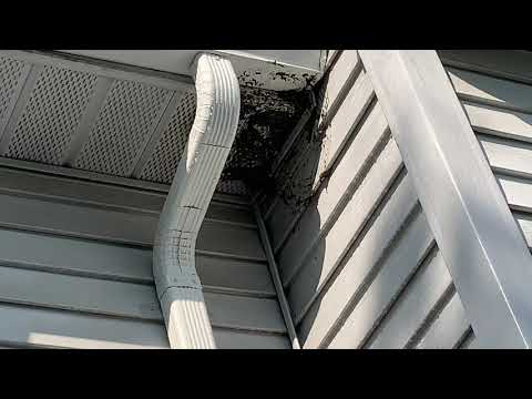 Bald-Faced Hornets' Nest Attached to the Soffit in Princeton Junction, NJ