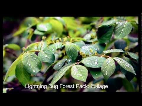 Video of Lightning Bug - Forest Pack