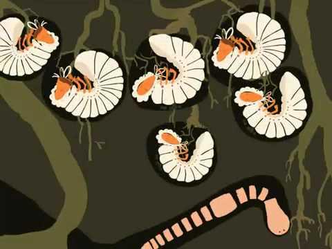 Гельминты и их вред