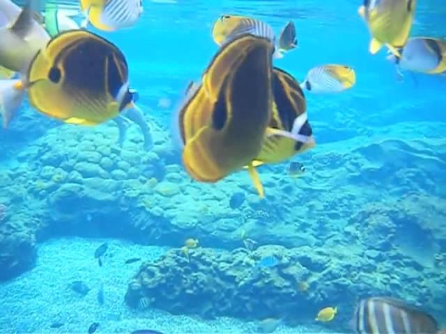 Rainbow Reef Snorkeling at Disney's Aulani, Ko Olina, Hawaii