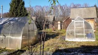 Дела огородные. Зимовка петунии, вербены и пеларгонии.