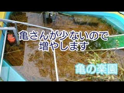 , title : '亀の楽園 岡山 亀が少ないので増やします