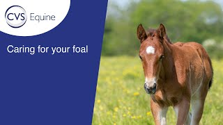 Caring for your Foal