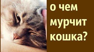 Кошки - это кошки. Секрет мурлыканья кошки. О чем мурчит кошка?  ИДЕИ ДЛЯ ДОМА и ХОРОШЕГО НАСТРОЕНИЯ