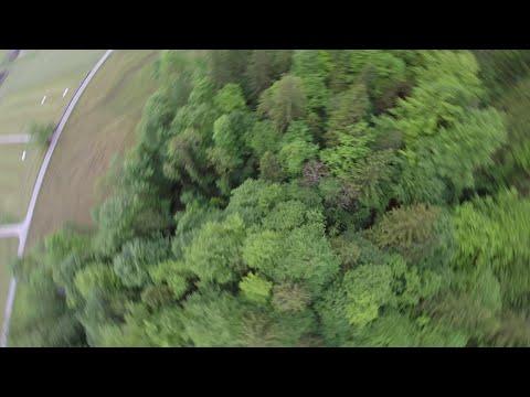 Landung auf Baum