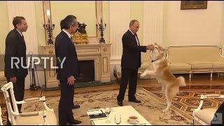 Russia: Down boy! Putin's security dog startles Japanese media