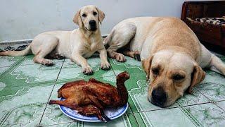 Thử thách Kim Chi Củ Cải trông vịt quay và cái kết bất ngờ | I left my dogs Alone with roasted duck