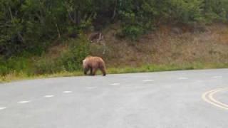 preview picture of video 'Alaskan Brown Bear on the Kenai Peninsula'