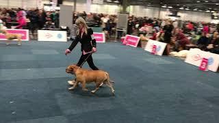 WORLD DOG SHOW 2017 Cadebou Female champion