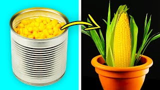 26 BRILLIANT HACKS FOR YOUR GARDEN THAT WILL COST YOU LESS THAN A DOLLAR