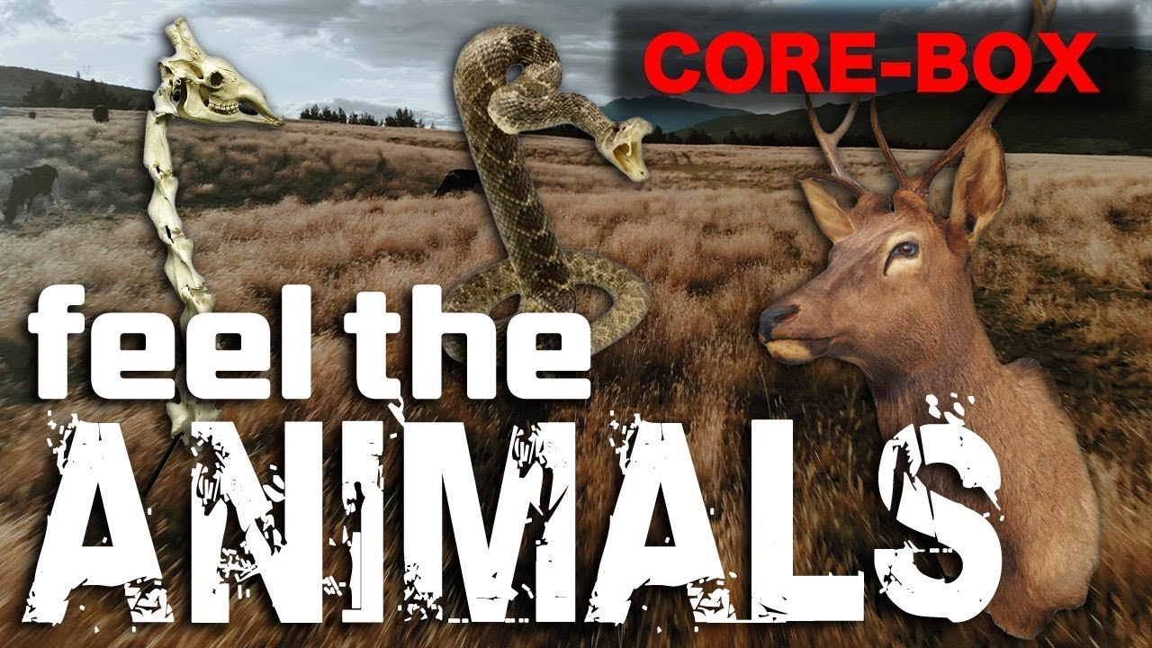 CORE-BOX JAPAN | One-of-a-kind Skeletal Specimens, Taxidermy Animals Etc Sold Here | Official Video