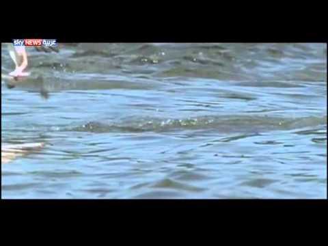 قناص يسكن السماء … فسبحان الخالق