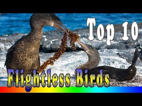 10 Amazing Flightless Birds In The World