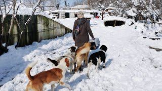 Homeless animals. Carrying for dogs and cats living at the streets in all weather conditions.