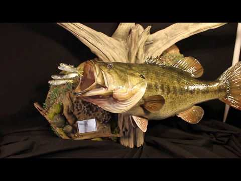 Striped Bass replica by Marine Creations Taxidermy - игровое