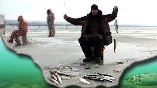 Рыбалка в омске весной куда ехать