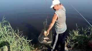 Рыбалка река ея