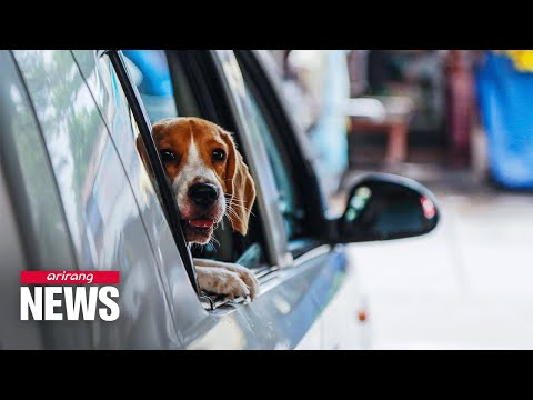 20% of pets with infected owners contracted virus: Dutch study