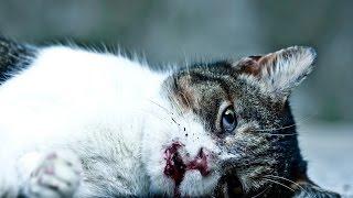 Смотреть онлайн Грустный стих про уродливого кота, Игорь Мазунин