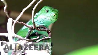 The animal smugglers - Techknow