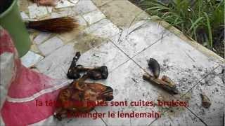 preview picture of video 'un MOUTON pour SAVAHO Grand Bassam 06.12'
