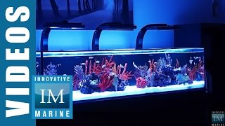 Innovative Marine NUVO SR Series 60, 80 & 120 Gallon Aquarium