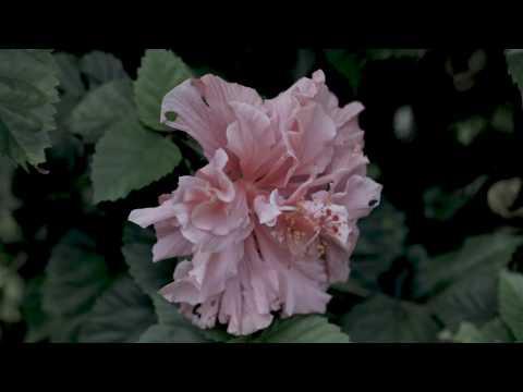 Vientre - Incessante (Audio)