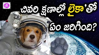 Anthariksham Telugu Full Movie of a Laika Dog in Space Video | Lika in Antariksham | About Stories