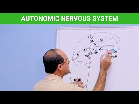 Neurology – Autonomic Nervous System