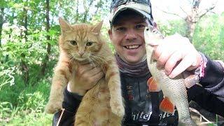 Кот с котенком на рыбалке