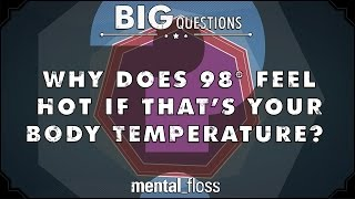 Why does 98 degrees feel hot if that's your body temperature?  - Big Questions - (Ep. 32)