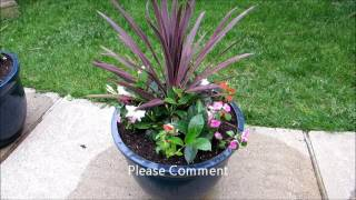 POTTED PLANTS , perennials inside annuals outside.
