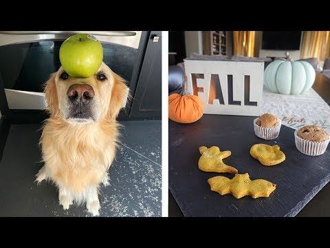 Pumpkin Spiced Cookies Fall Recipes For Dogs A Viral Youtube Video Link By Tmartn2 Labradorpuppies Steem Goldvoice Club Tmartn2 • should we continue with career mode? goldvoice club