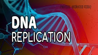DNA - Replication: Lagging Strand