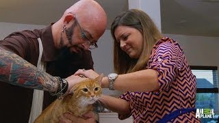 A Diagnosis for Whiskey the Pooping Cat | My Cat From Hell