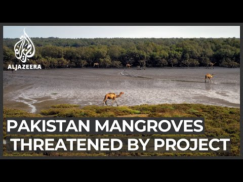$50bn housing project threatens mangroves on Pakistani island