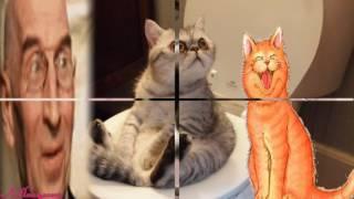 Юмор  Прикольные животные Улыбайтесь   Humor Funny Animals