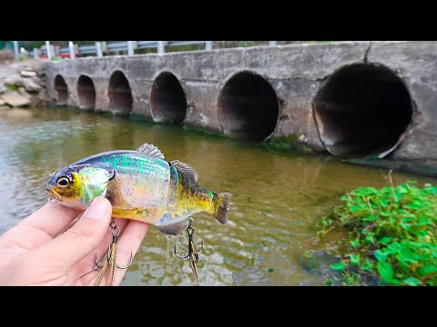 Download Catching DOUBLE DIGIT Bass While Bank Fishing Mp4 HD Video and MP3