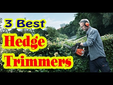 Best Hedge Trimmer to Buy in 2017