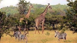 Selous game reserve , fly in Safari-Tanzania