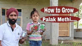 How To Grow Palak, Coriander & kasuri methi Growing Spinach