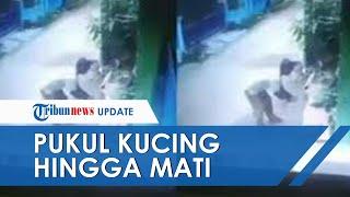 VIRAL Video Kucing Dipukul hingga Mati di Bekasi, Disebut karena Buang Air Besar di Pot Pelaku