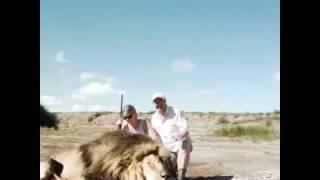 Сафари селфи , охота на львов!