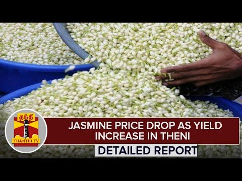 Detailed-Report--Jasmine-Price-Drops-as-Yield-Increase-in-Theni--Thanthi-TV