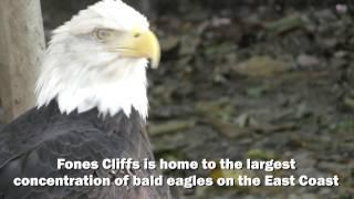 Fones Cliffs