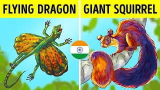7 of the Rarest Animals Found In India