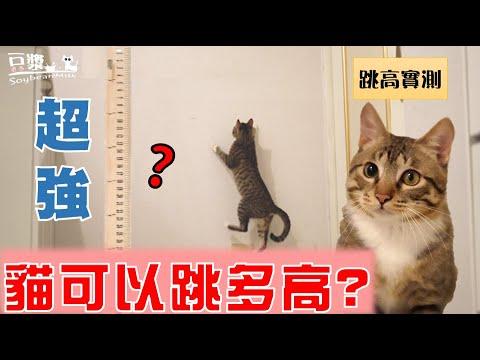 你知道貓咪其實會飛?